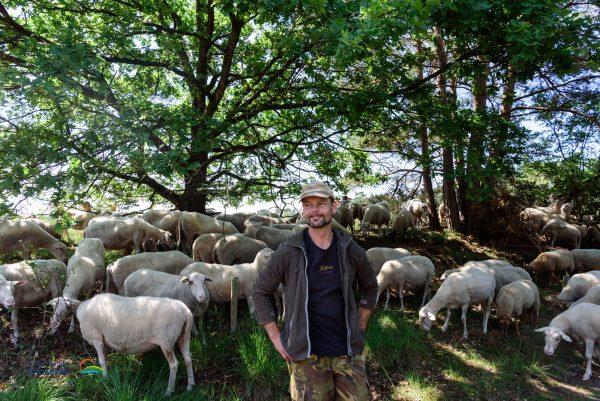 Frits van Laar - gediplomeerd schaapherder